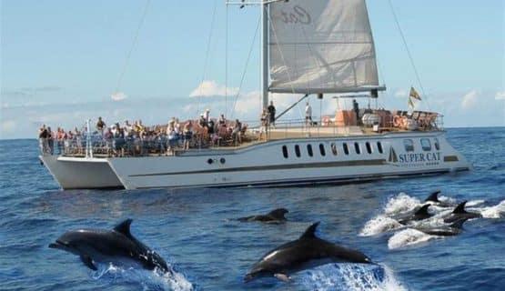 super-cat-dolphin-trip-gran-canaria