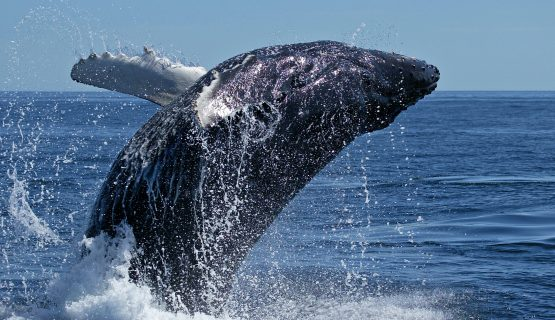 whales-in-gran-canaria