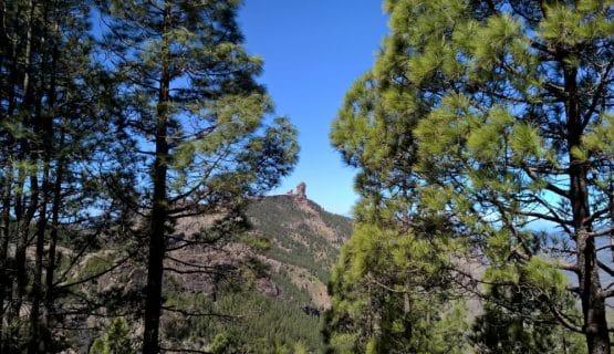 pine-forrest-jeep-safari-gran-canaria