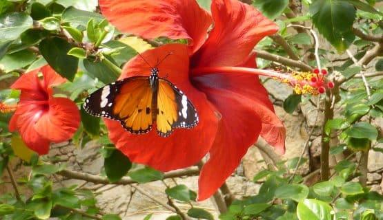 butterfly-palmitos-park-gran-canaria