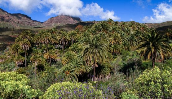 valley-of-a-thousand-palms-gran-canaria