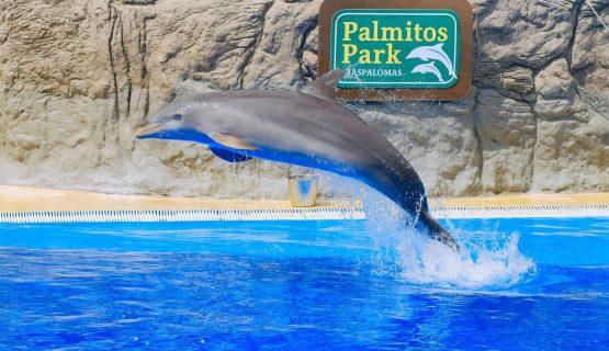 dolphin-show-gran-canaria