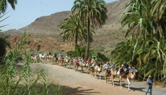 camel-trek-gran-canaria