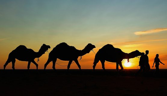 camels-at-sunset-gran-canaria