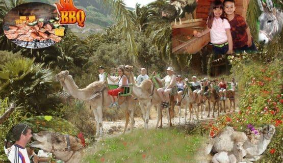 la-baranda-camel-safari-park-gran-canaria