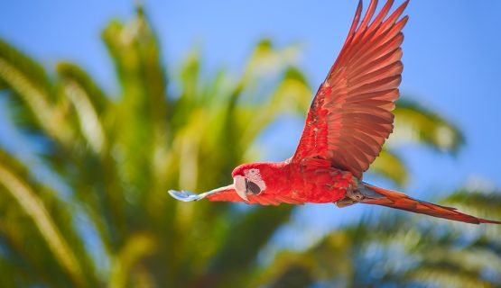 parrot-palmitos-park-gran-canaria