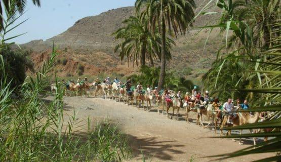 camel-safari-gran-canaria