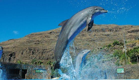 jumping-dolphin-palmitos-park