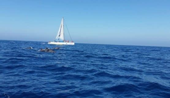 boat-in-horizon-gran-canaria
