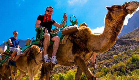 fun-on-camels-maspalomas