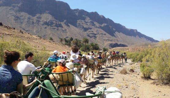 camel-tour-gran-canaria