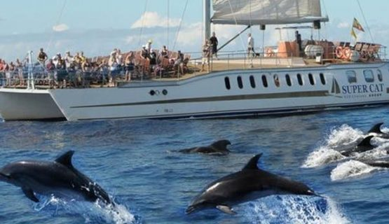 supercat boat and dolphins gran canaria 2019