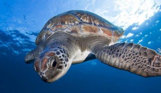 turtle dolphin boat trip gran canaria